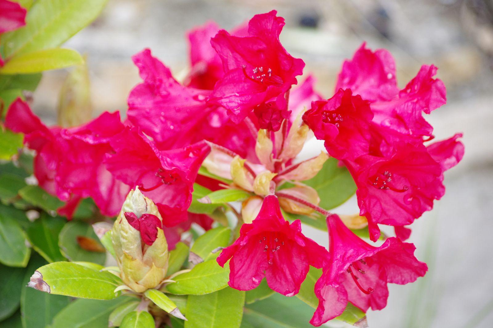 jardin en provence
