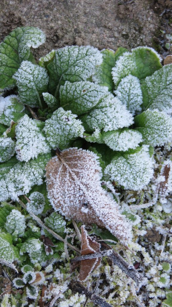 l'hiver est là, beaucoup de visites dans le jardin