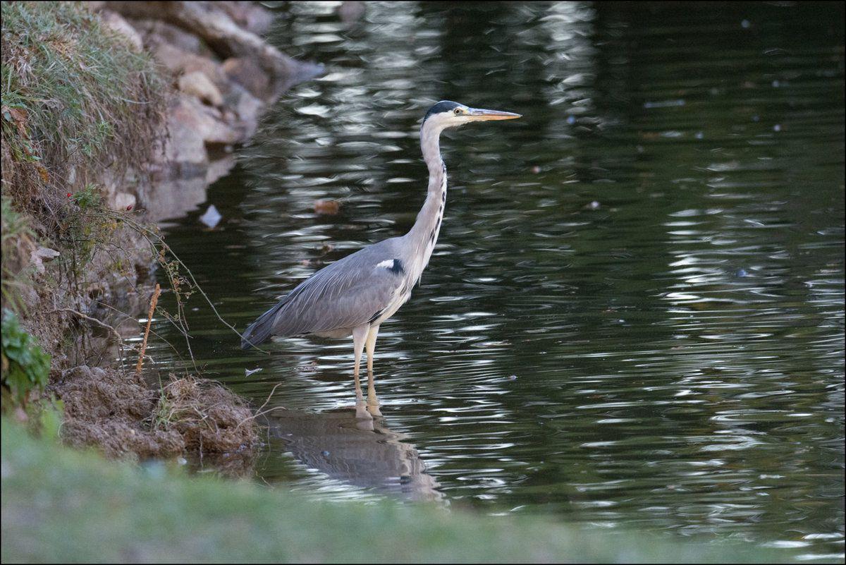 Quelques oiseaux, toujours au parc de Lacroix Laval