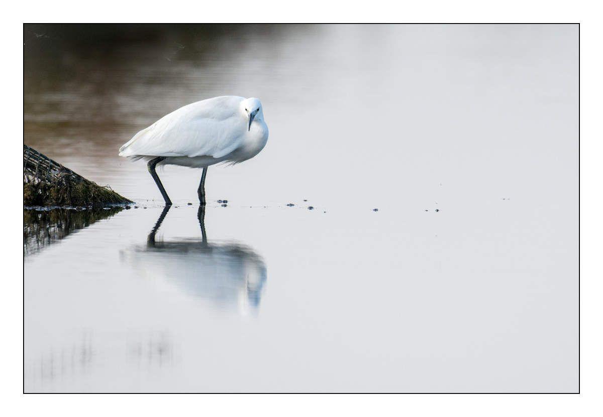 Oiseaux de Vendée
