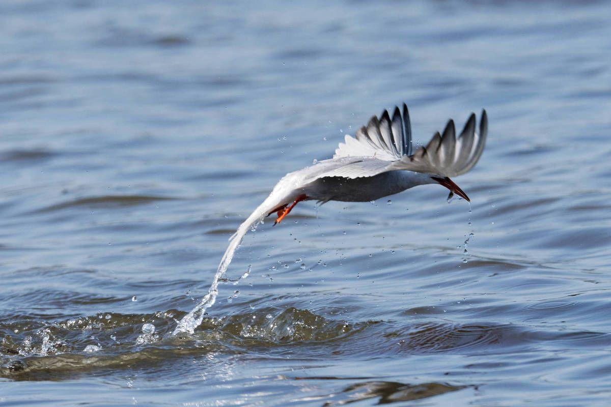 quelques oiseaux de Vendée et de Bretagne