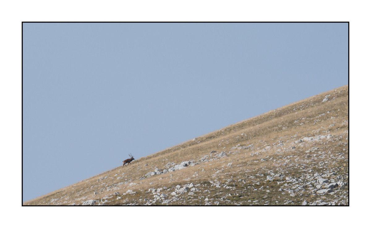 2019 Le parc des Abruzzes partie 2 : le cerf en alpage