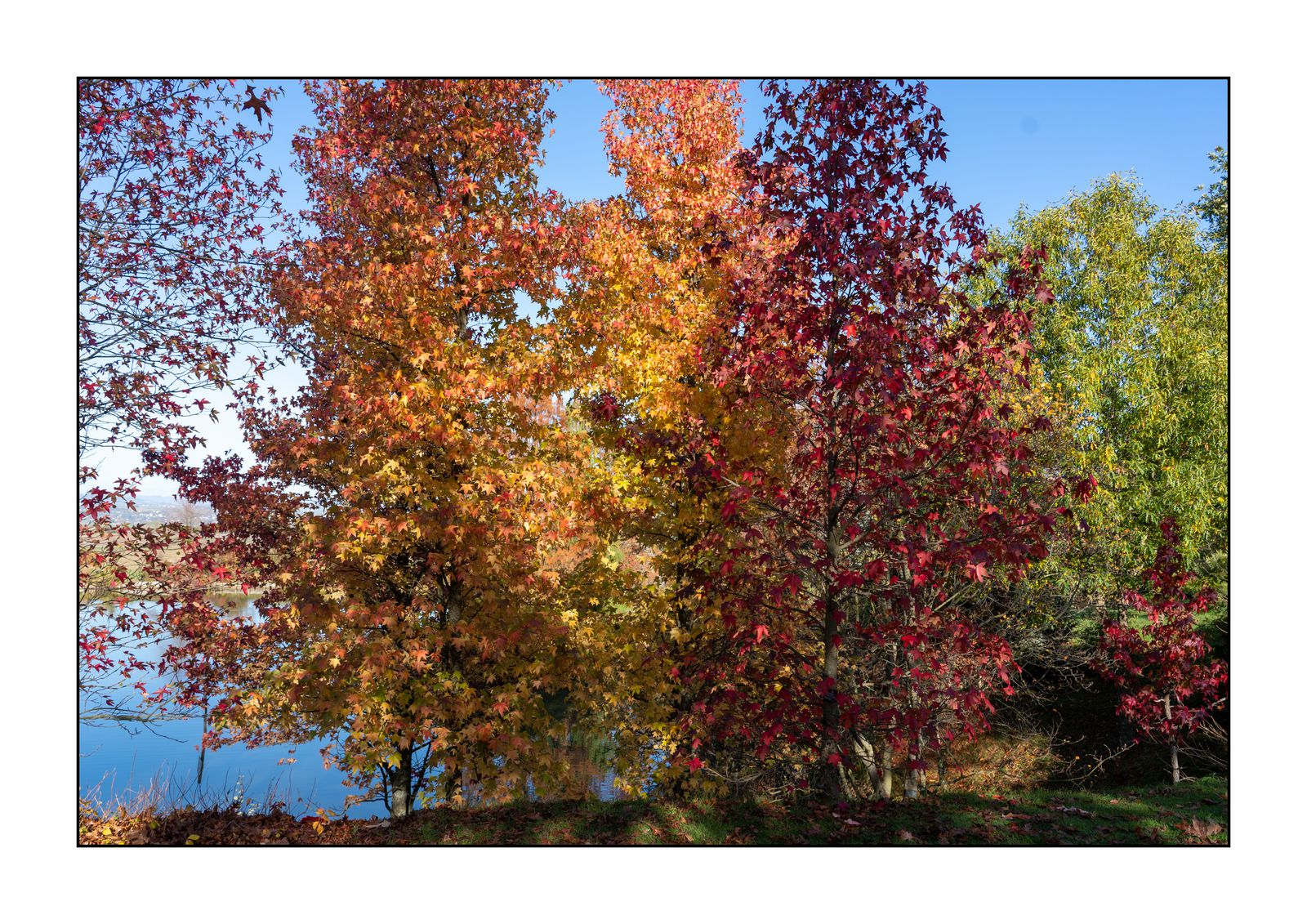 Tons d'automne tardif