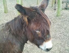 Humour Ivrogne: L'âne connait-il les méfaits de l'alcool?