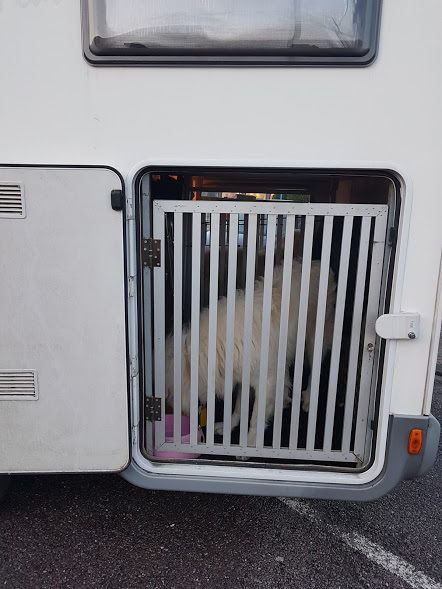 Humour chien: Toutou africain contre berger allemand