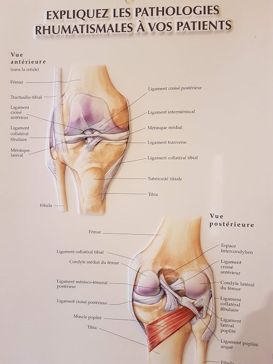 #genou #anatomie #Knie #knee #planche #anatomy #Diz