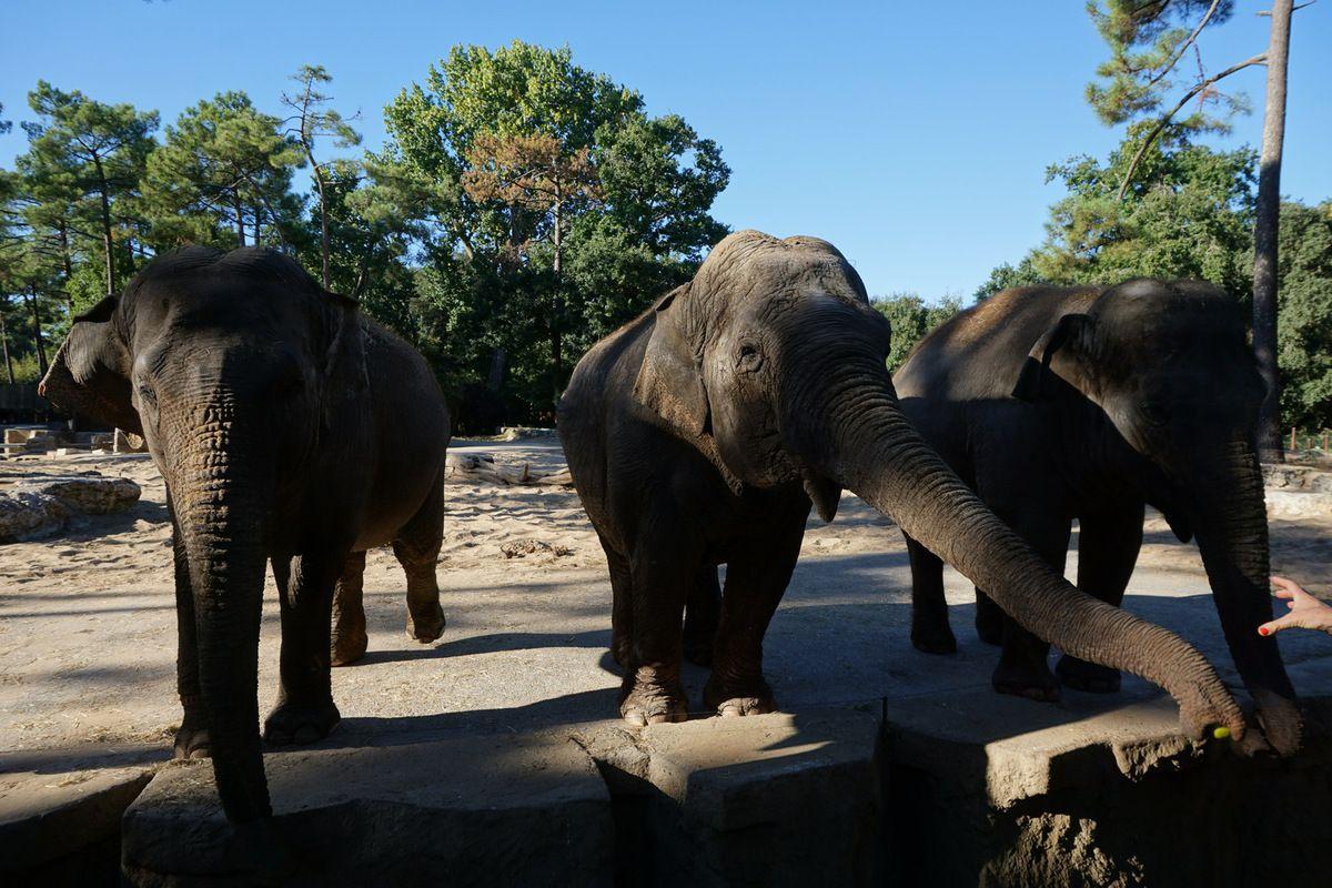 Les Charentes en famille : le zoo de La Palmyre