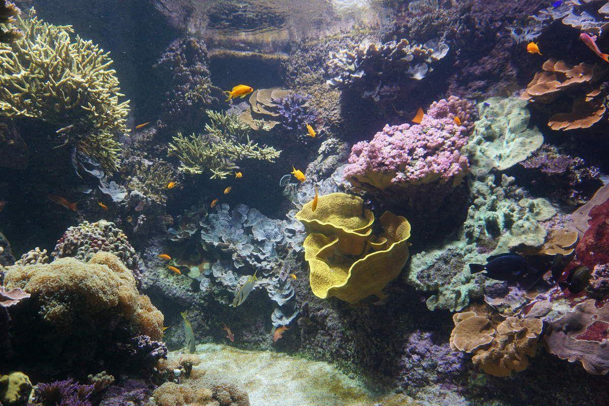 Les Charentes en famille : l'Aquarium de la Rochelle