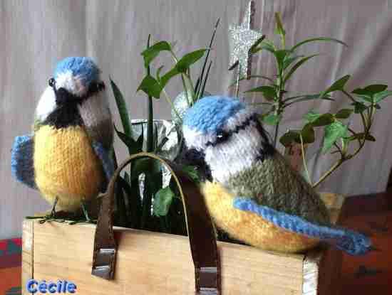 Galerie de la mésange bleue