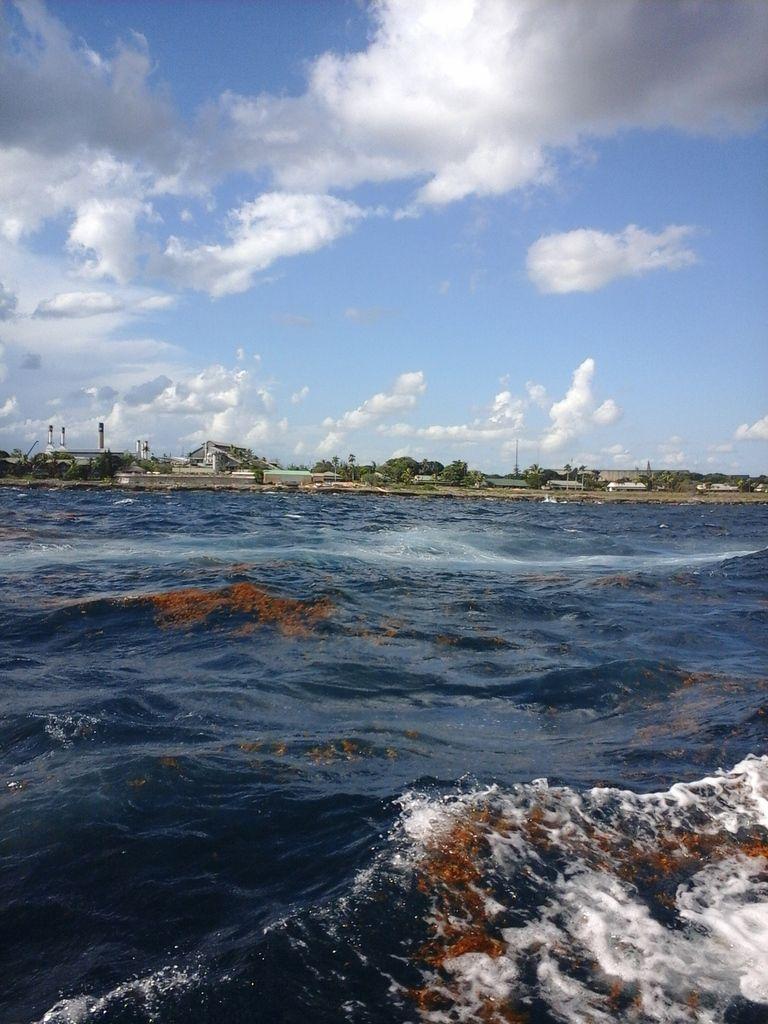 Retour sur la cote, et quelques algues au passage, chose qu'il n'y avait pas sur cette plage de reve...