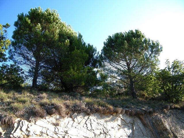 1 - Les pins en 2015.