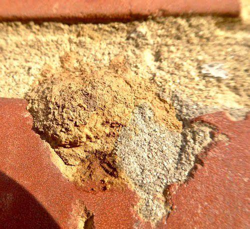 """Une Osmie cornue femelle """"Osmia cornuta"""" obture son nid avec du mortier, de l'eau mélangée à de la terre. - avril-"""