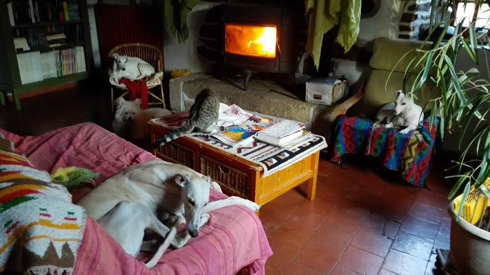Une nouvelle déléguée rejoint sos chiens galgos pour la Sarthe et alentours: Isabelle Durand