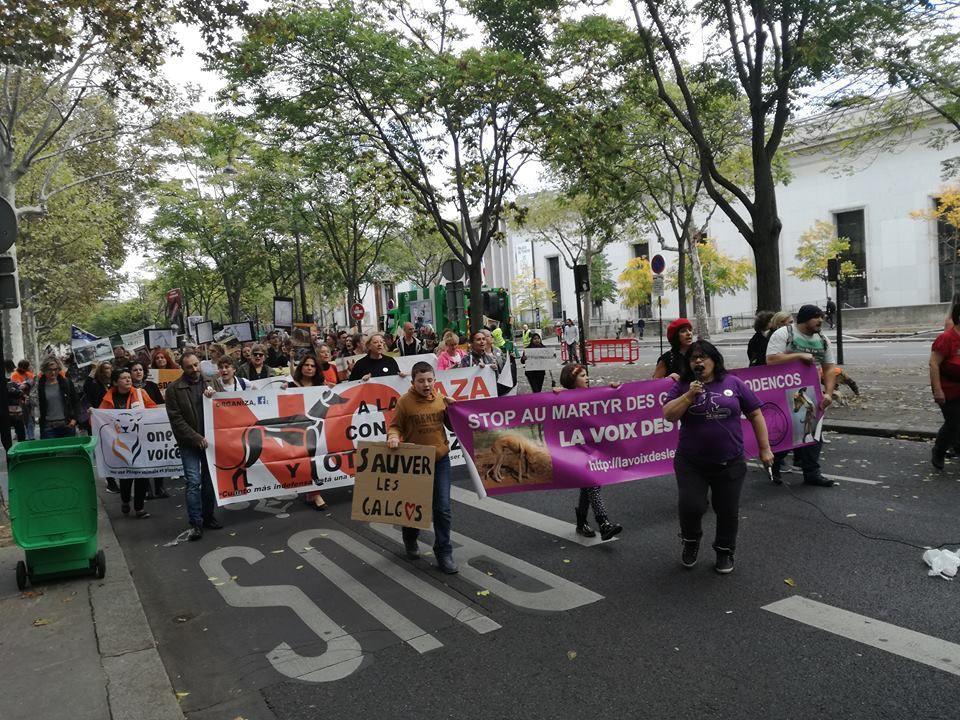 marche et animation pour la defendre la cause des levriers d'Espagne à Paris place Iena