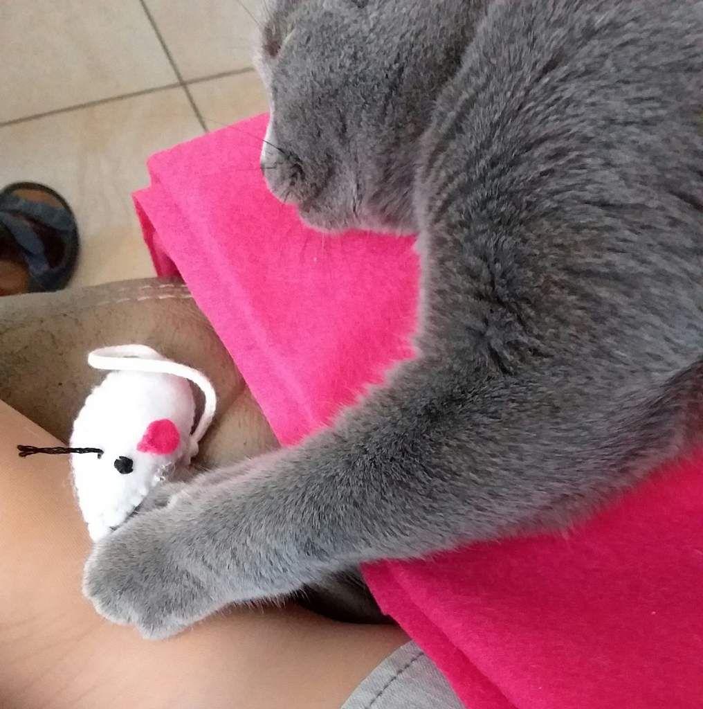 Une petite souris pour le chat.....!