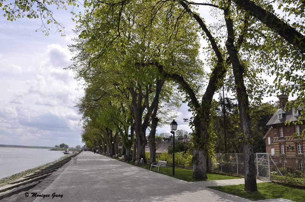 La jolie promenade bordée d'arbres majestueux.