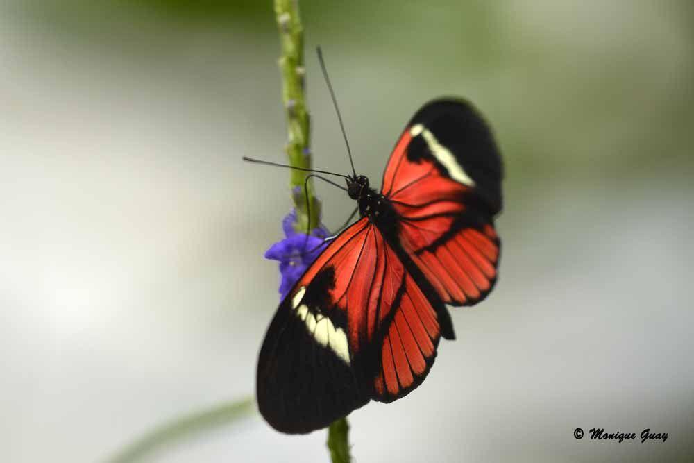Papillon exotique