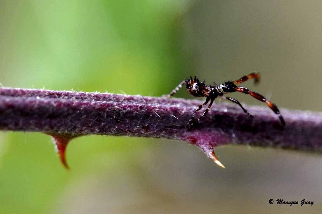 Pas de danses et acrobaties d'un insecte
