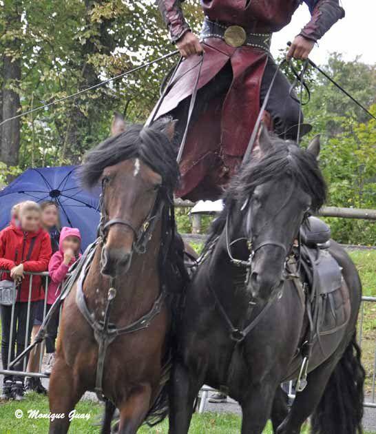 Zoom sur ces deux chevaux en plein effort.
