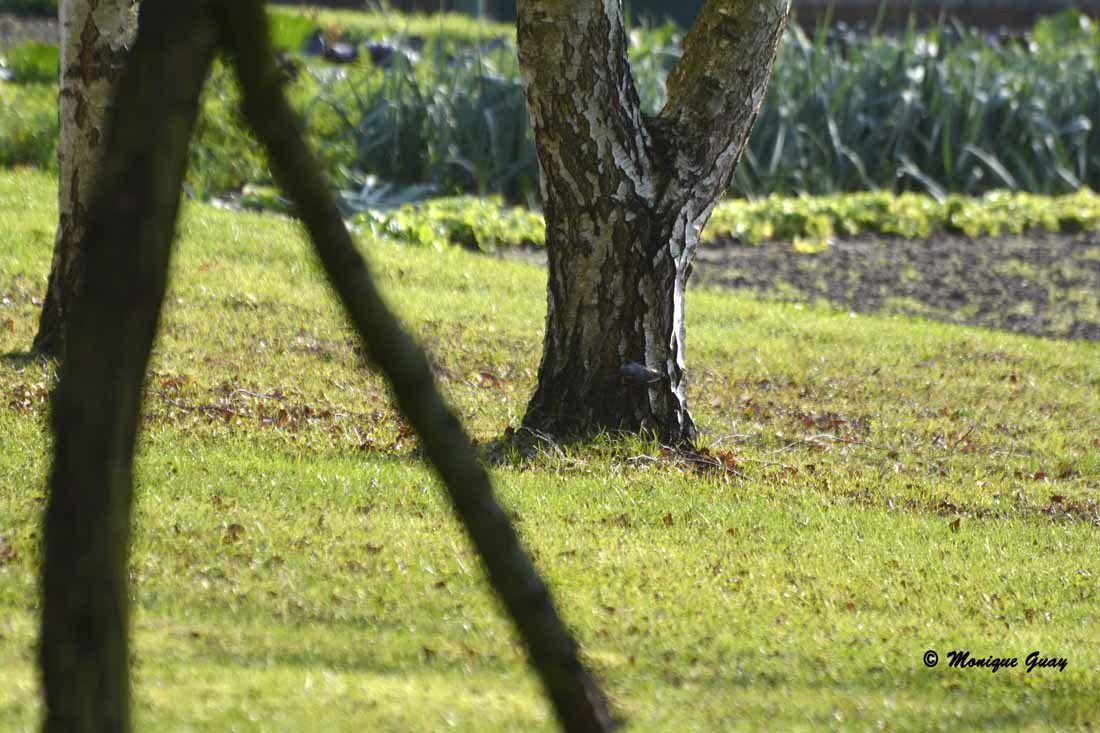 Je me suis cachée derrière le premier tronc que l'on aperçoit à gauche.