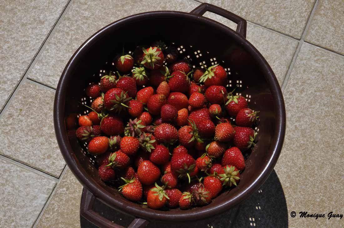 De très beaux fraisiers, cette année: alors on se régale avec les fraises.