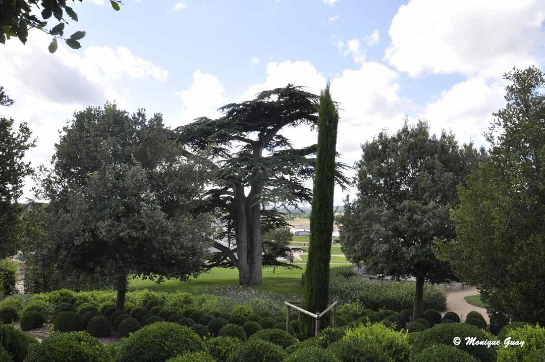 En contre-bas, vue sur le cèdre du Liban.