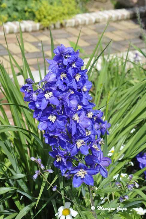 Quelques fleurs des Jardins secrets