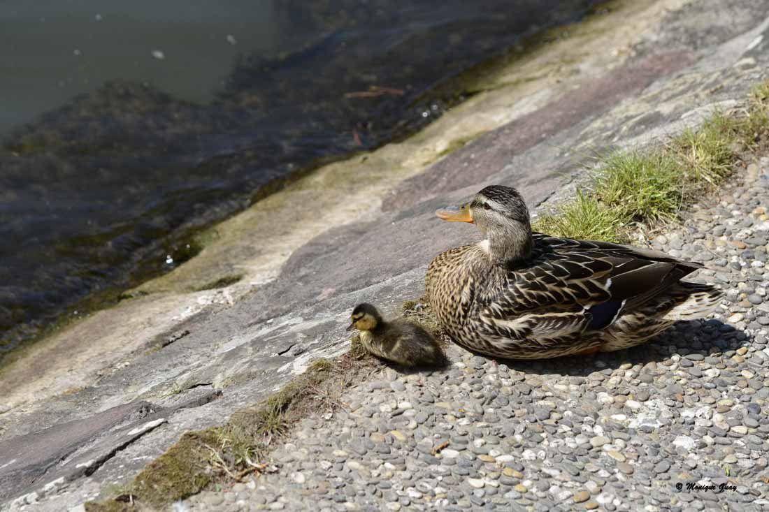 La mère et son petit
