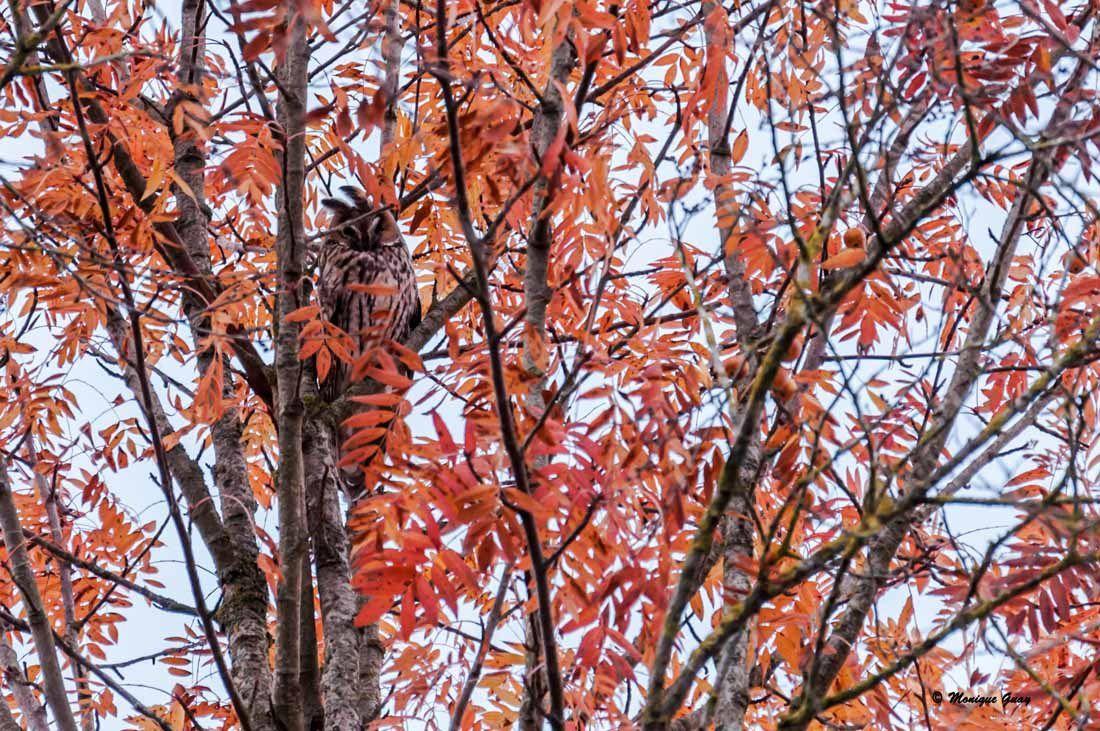 Feuilles aux couleurs d'automne en ce 16 novembre.