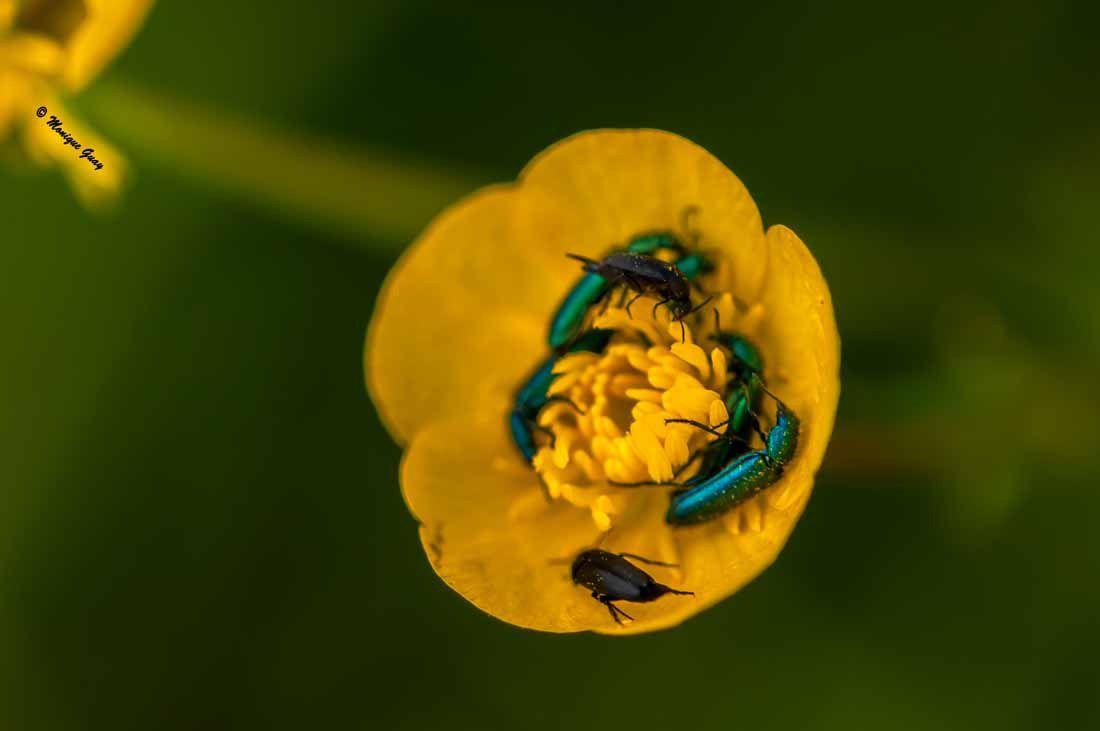 Attroupement d'insectes