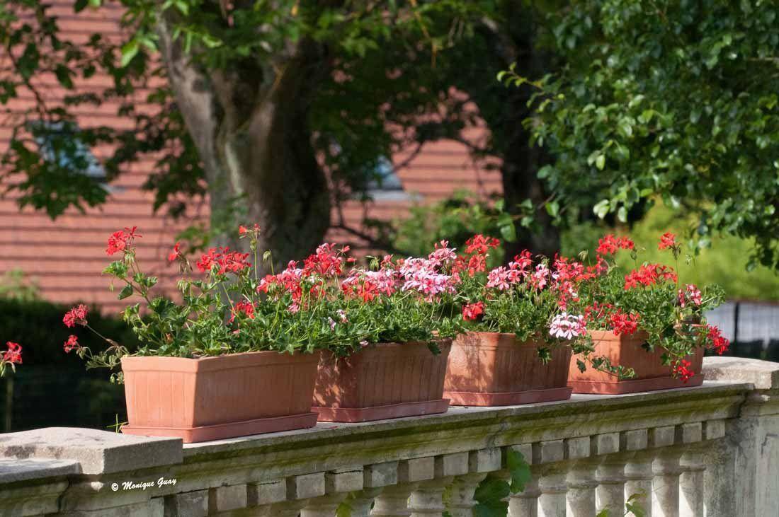 Face à la terrasse, la balustrade est surmontée de jardinières de géraniums.