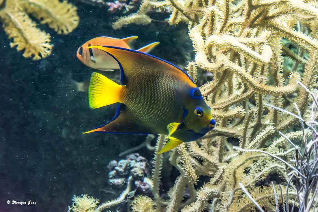 Aquarium tropical à Océanopolis.