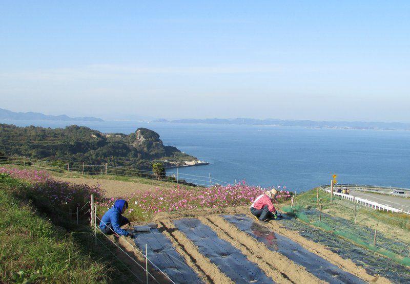 L'île de Teshima dans la mer intérieure du Japon