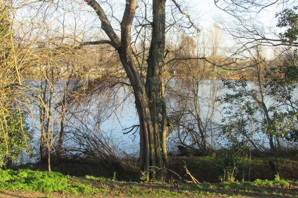Les bords de la Garonne en hiver