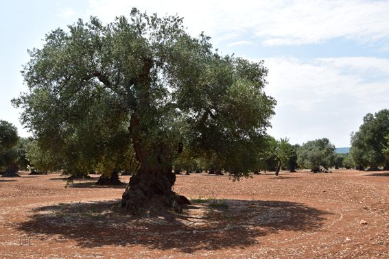 Album 2019 - L'arbre