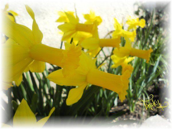 ***C'est le Printemps !!! Sourire (Balades dans le Jardin, Fin Février & Début Mars 2015)***