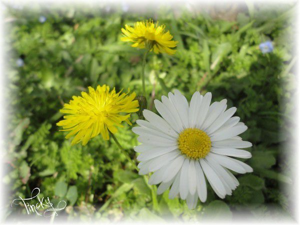 ***P'tites Balades de Printemps dans Nos Jardins... Sourire