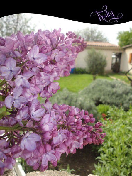 ***P'tites Balades dans les Jardins, le 18, 23 & 25 Avril 2015... Sourire***