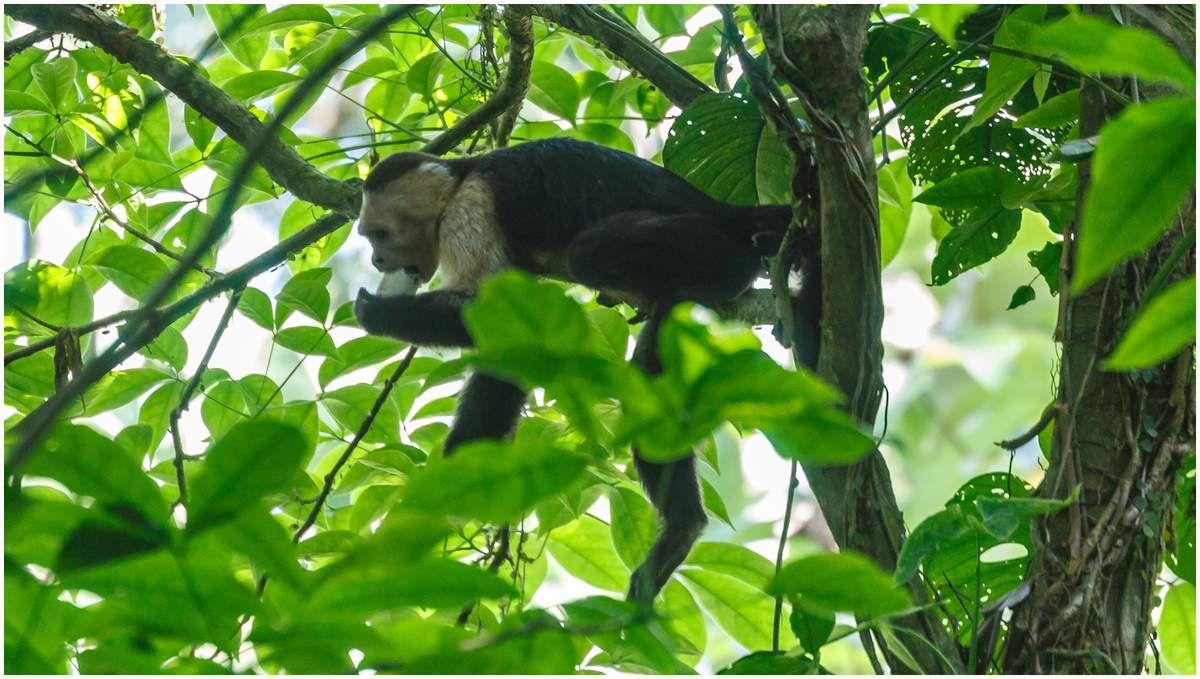 Costa Rica - La côte pacifique - Punta Leona