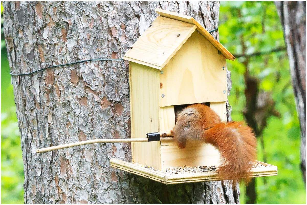 Le repas de l'écureuil