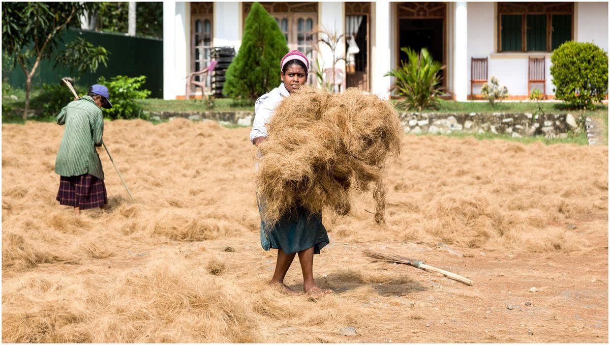 Sri Lanka - A la campagne