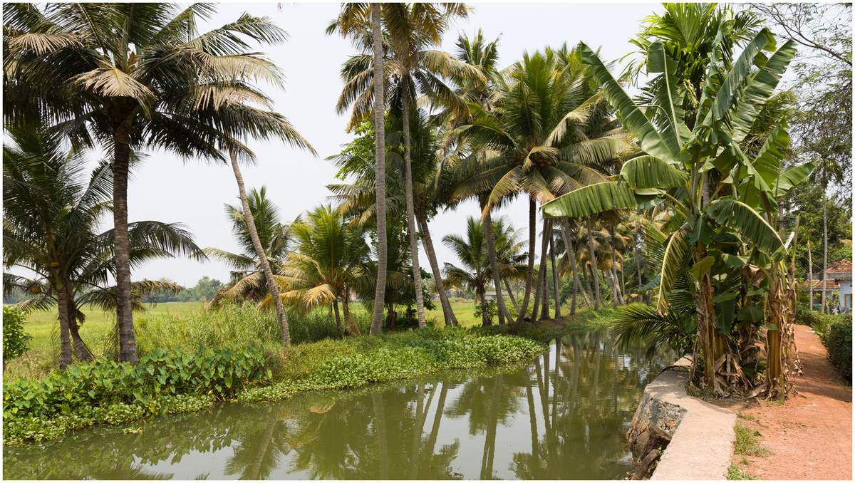 Kerala - Inde du sud