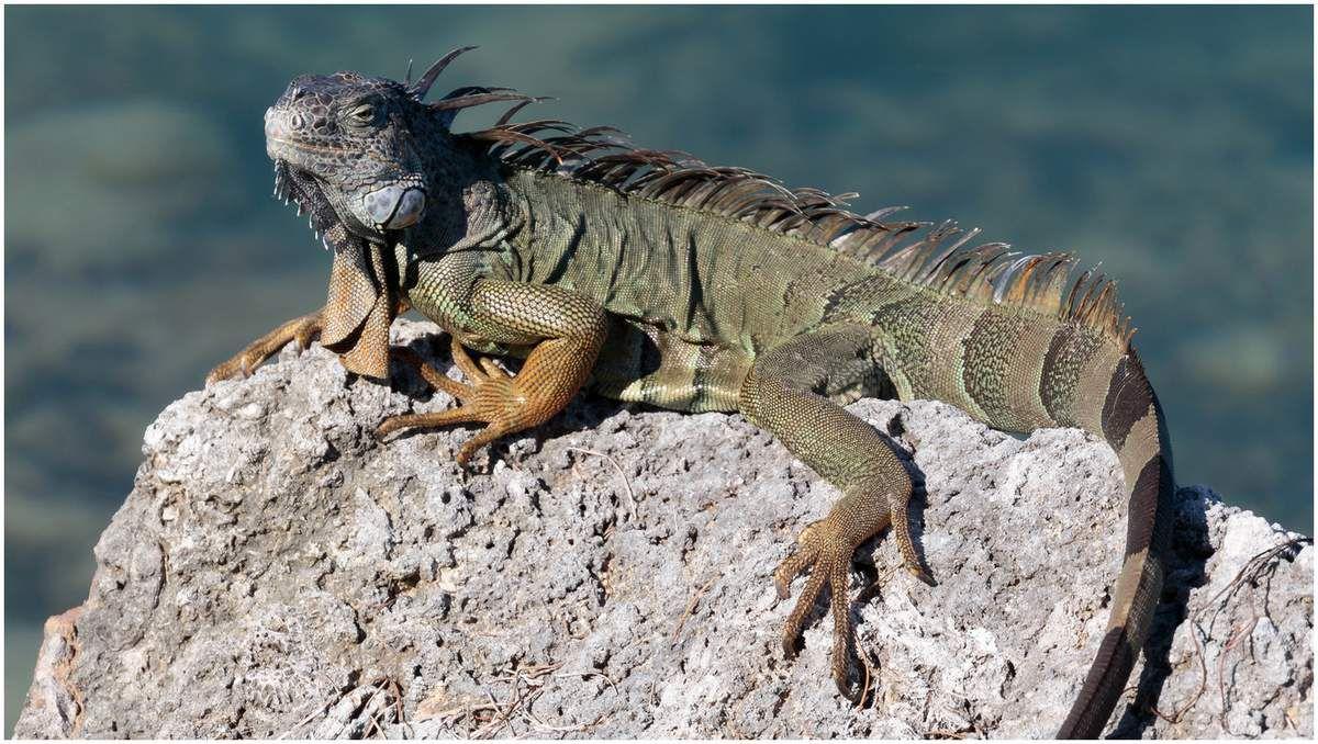 Vie sauvage en Floride