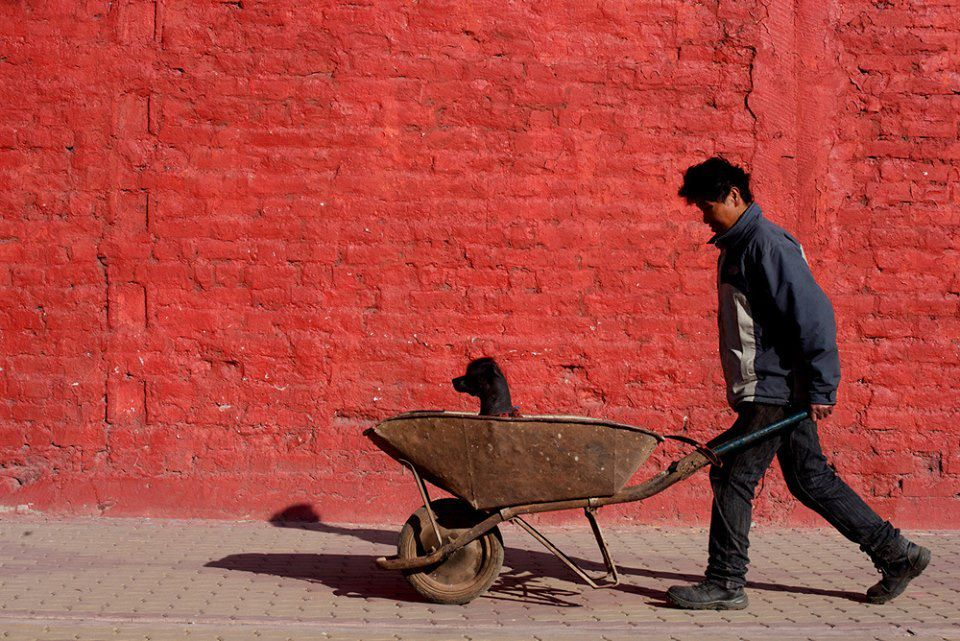 Man, dog, wheelbarrow © Anirudha (Robi) Chakraborty
