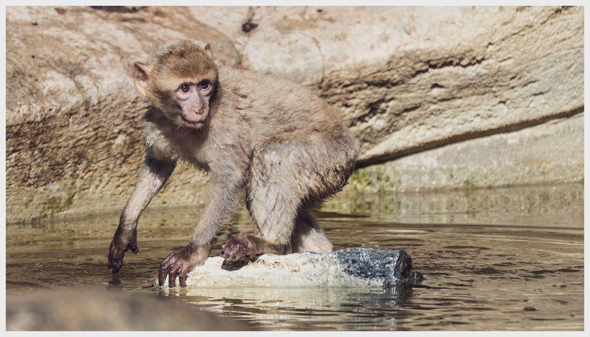 Beauval - Primates