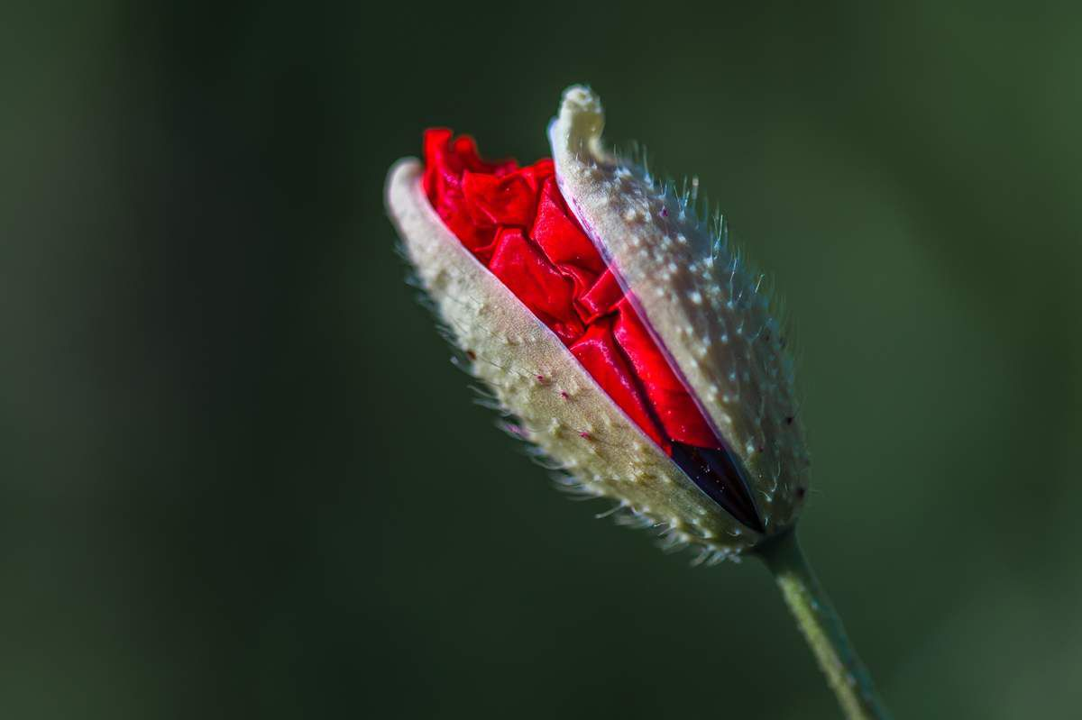Clichés champêtres printaniers
