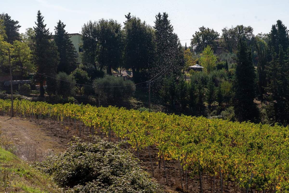 Les très vallonnés paysages toscans