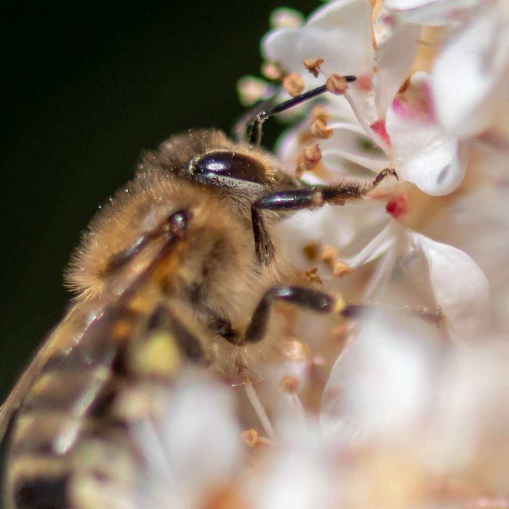 Fleurs et insectes dans mon jardin printanier