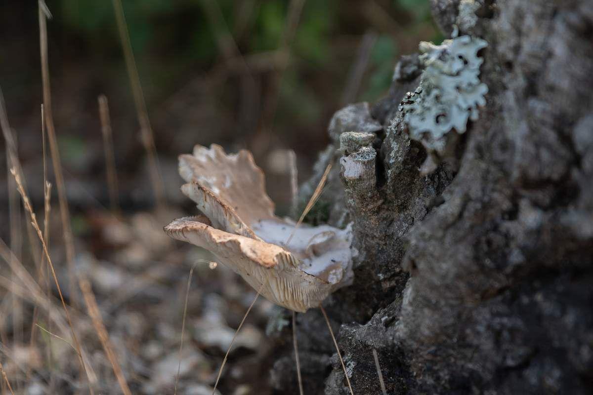 Promenade en forêt et champignons