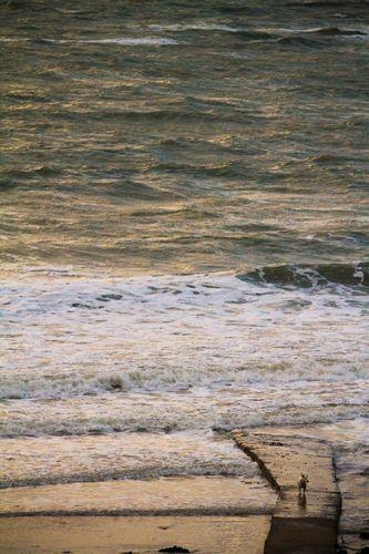 La mer a bien monté... bonnes vagues dont le chien et ses photographes de propriétaires tentent de profiter...